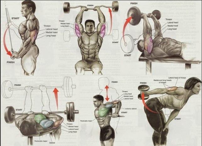 Упражнения трицепс. Самбо-Уфа