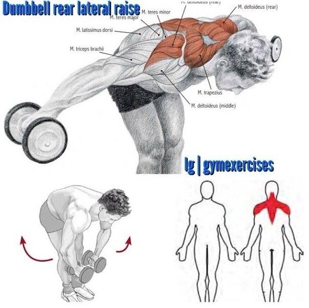 Dumbbell Lying Rear Lateral Raise  Exercise Videos