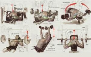 Упражнения грудные мышцы, трицепс, плечи. Самбо-Уфа