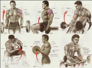 Упражнения на бицепс, плечи, мышцы рук. Самбо-Уфа