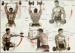 Упражнения на развитие трапеции, трицепса, плеч. Самбо-Уфа